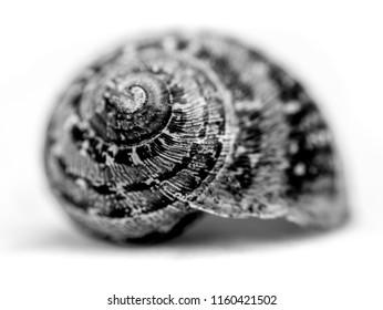 Symbolique de l'escargot