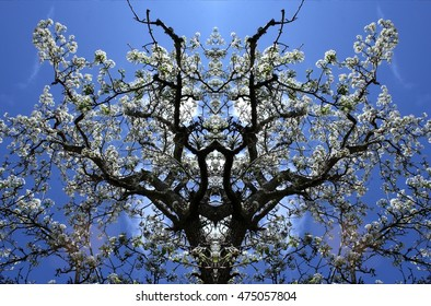 symmetric composition, kaleidoscopic, geometric composition, of ,blooming apple tree, spring, background, flowers, flower, nature, floral, garden, summer, beautiful, landscape, blossom, white,tree