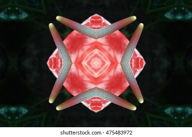 symmetrical composition, kaleidoscopic, mirror effect,red calla flower, spring, Allegory of the female sex, of the clitoris, of feminism, visual allegories, visual metaphors, photographic allegories,
