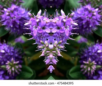 symmetrical composition, kaleidoscopic, mirror effect,triaca, geometric composition flower, Veronica officinalis,spring, background, flowers, flower, nature, floral, garden, summer, beautiful,