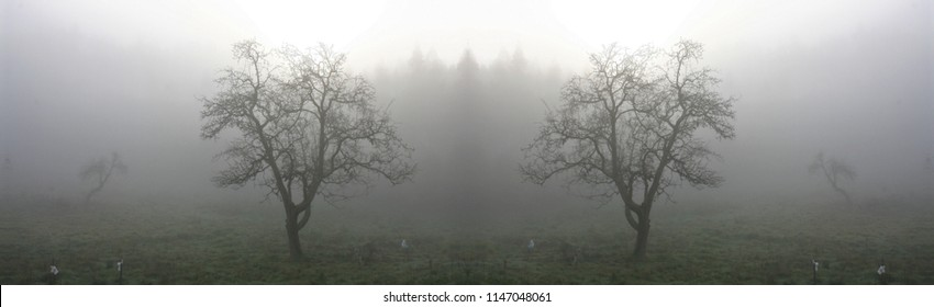 symmetrical and panoramic photography of landscapes with fog, in Galicia, Spain,