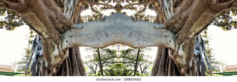 Symmetrical and panoramic photography of a large ficus tree, forming a new structure of artistic elements on the waterfront of the city of Cadiz, spain,
