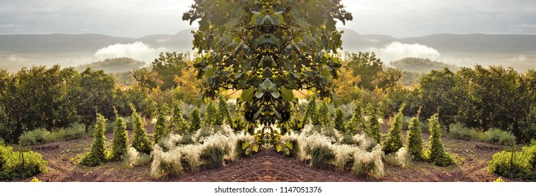 symmetrical and panoramic photography of an orchard,