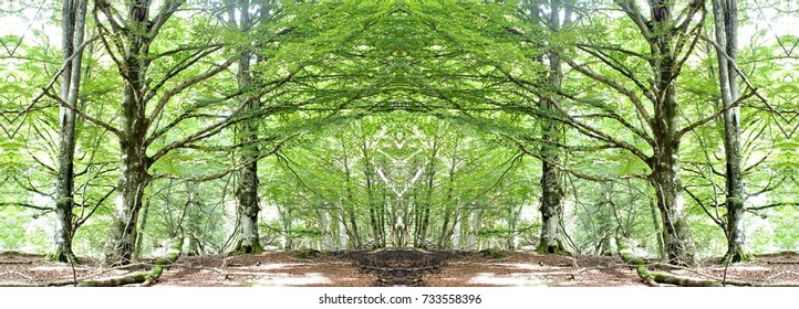 symmetrical photograph of beech forest in Summer in the Natural Park of Urbasa, Navarra, Spain,