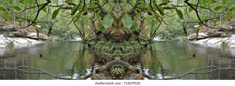 symmetrical photography of a forest