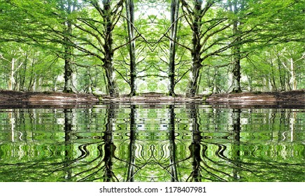 symmetrical Photography with reflection in the water of beech trees in the forest,