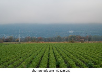 Symmetrical plants with Liechtenstein in the background
