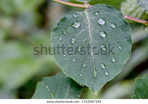 Symmetry of raindrops on a leaf.