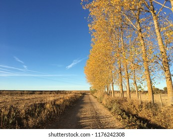 symmetry vs asymmetry in nature autumn walk by fields gold trees blue sky fall shadows dirt road