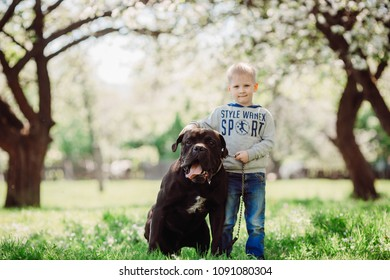 The sympathetic boy stands  near dog in the park