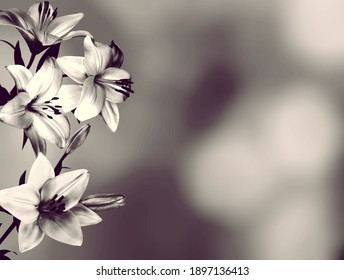 Sympathy card with lily flowers. Black and white image
