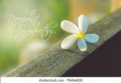 Sympathy text card. White frangipani flower on wood.