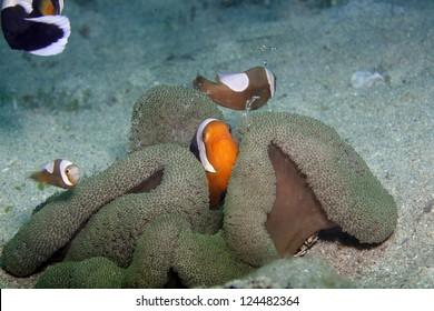 Sympiose im Meer