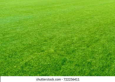 Synthetic grass, texture