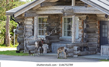 SYOTE, FINLAND - JULY 16, 2018: Horned guests. Reindeer with cub near wooden cottage