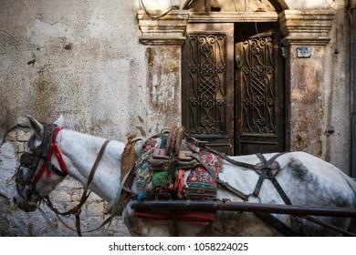 SYRIA, Aleppo DECEMBER 5, 2010: Aleppo, Syria. Street view with horse