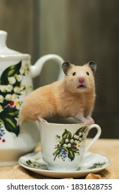Syrian hamster  on a cup