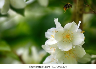 Agents of Pollination Images, Stock Photos & Vectors
