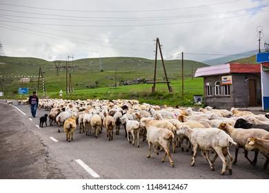 SYUNIK, ARMENIA - June 2018: Flock of sheep on the road in Armenia. Armenian countryside, Syunik province, Armenia