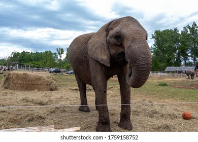 SZADA, HUNGARY - JUNE 01, 2020 - Picture of an elephant in a car safari park in Hungary
