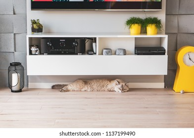 Szczecin, Poland - July 15, 2018: Siberian house cat lying under a white wooden furniture in a living room