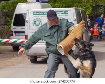SZEGED, HUNGARY - APRIL 26. 2015 - Excise officer (NAV) holds a presendation with a working dog in the 'Earth day' event in Szeged Zoo.