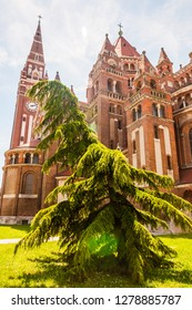 Szeged, Hungary - June 18, 2013: Emotional shape of evergreen conifer tree growing near the Votive Church. The Votive Church and Cathedral of Our Lady of Hungary is a twin-spired church in Szeged.