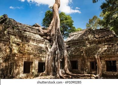 Ta Phrom at Angkor Wat, Cambodia
