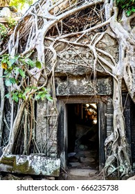 Ta Prohm with Roots. Angkor Wat. Siem Reap. Cambodia.