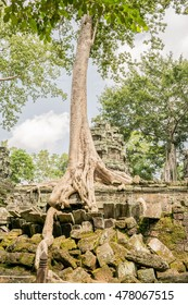 Ta Prohm temple at Angkor Archaeological Park of Siem Reap in Cambodia.