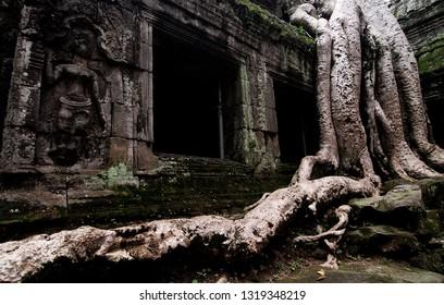 Ta Prohm, Temple, Angkor, Combodia