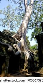 Ta Prohm Temple, Angkor, Combodia