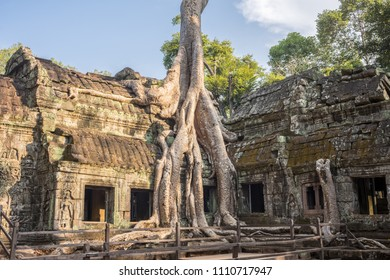 The Ta Prohm Temple has been swallowed by the jungle, its crumbling towers and walls locked in the slow muscular embrace of vast root systems - Ta Prohm Temple, Siem Reap, Cambodia