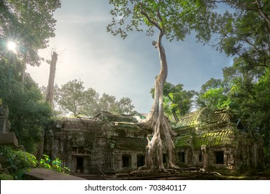 Ta prohm temple or Tom rider or green Mos and big tree temple is on Angkor wat temple area in Siem reap, Combodia, Asia, unesco, amazing, travel and temple concept