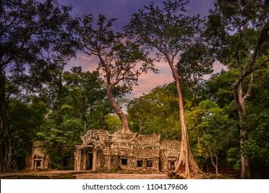 ta prohm,Cambodia,UNESCO in 1992 as a World Heritage.