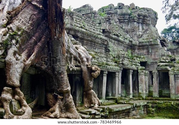 Ta Prom at Angkor What