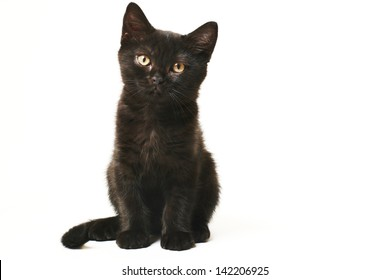 Tabby Black British Shorthair Kitten on white background Cute british shorthair kitten standing on white background