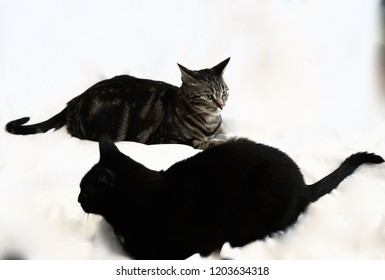 Tabby And Black Cat
