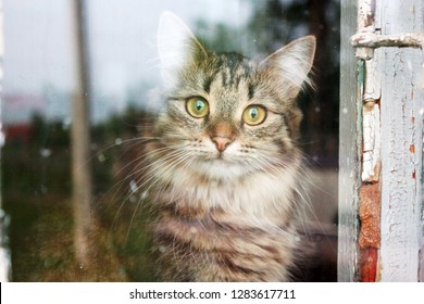 Tabby cat behind the old window
