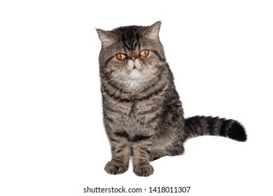 Cute Cat On White Background Images Stock Photos Vectors