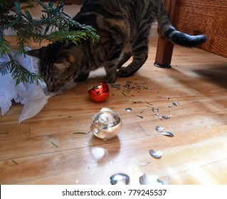 Tabby cat with broken christmas ornaments under the tree