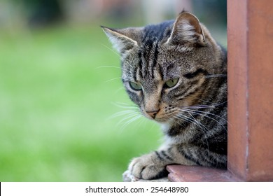 Tabby cat close up, selective focus. Green background and copy space.