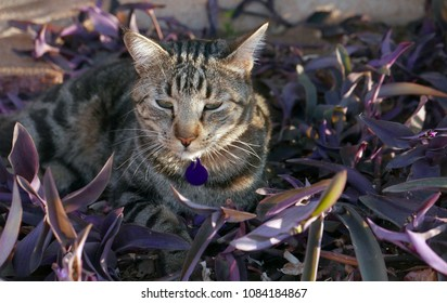 Tabby cat with collar sitting in plants