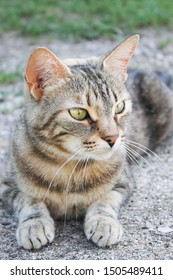 tabby cat cute and beautiful with green eyes