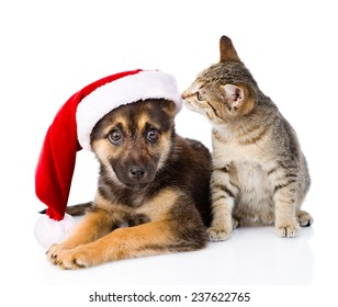 Tabby Cat and Dog with Santa Claus hat. isolated on white background