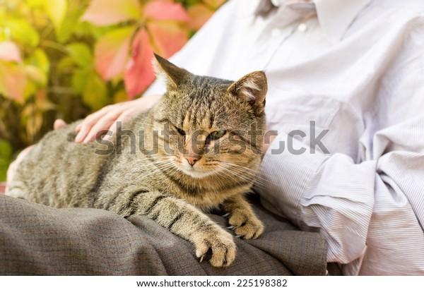 Tabby cat enjoying cuddling in old man's lap