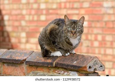 Tabby cat in garden