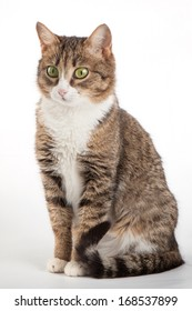 Tabby cat with green eyes on white isolated background