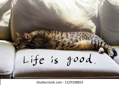 A Tabby cat happily sleeping on a couch. Life is good handwriting text. Conceptual image.