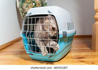 Tabby cat inside a cat carrier box